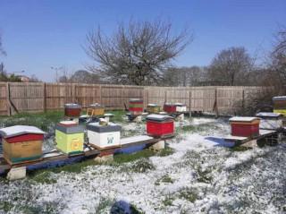 Le rucher sous la neige - Février 2021